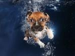 Ava Beagle Mix Puppy