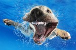 Smiling Puppy Swims For First Time