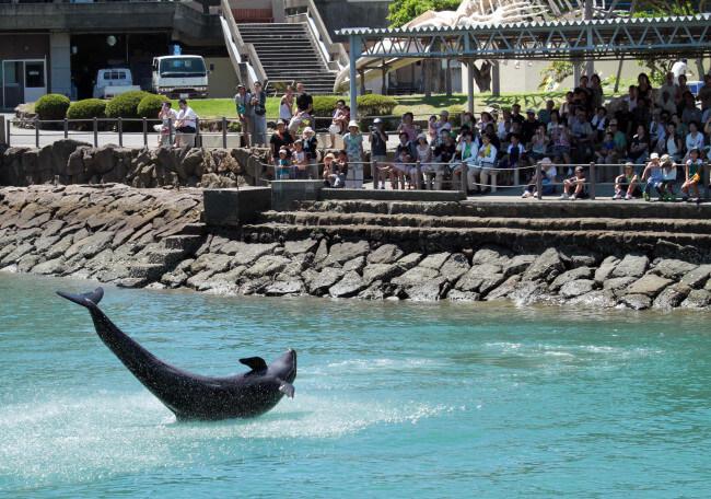 Visitors watch a dolphin perform at the Taiji Whale Museum. Photo credit: Yuzuru Yoshikawa/Bloomberg