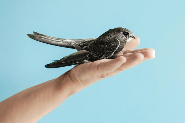 Judith Wakelam holding one of the birds that she rehabilitates. Photo credit: Anna Huix for the NY Times