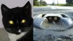 cats eyes inspire road reflectors