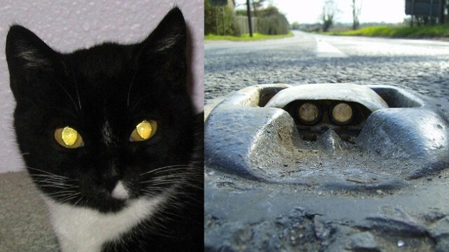 "Creepy cat eyes inspired the invention of safety road markers. ""Photo Credit: ww2.kqed.org"