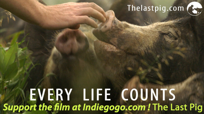 Filmmaker Allison Argo has won six Emmy's for her work. Photo credit: The Last Pig