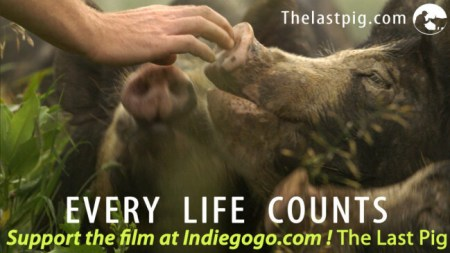 This animal right's documentary focusses on farmed animals. Photo credit: The Last Pig