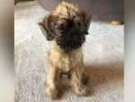 Ellen Degeneres instagram picture of newly adopted puppy dog named Kid