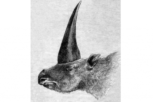First published restoration (1878) of E. sibiricum by Rashevsky under supervision of A.F. Brant. Wikimedia