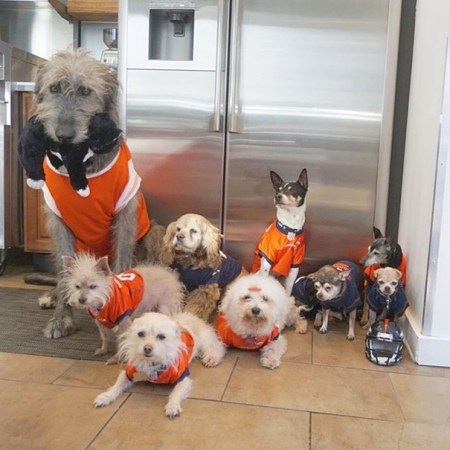 Greig is the proud father of ten elderly shelter dogs. Photo credit: Bored Panda