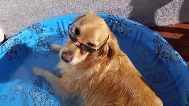 Cool Dog Chills Out In Kiddie Pool