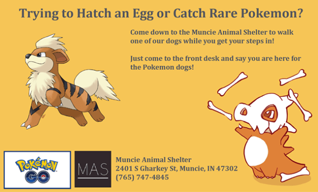 """The Muncie Animal Shelter took to Facebook on Tuesday, writing: """"Come out to the Muncie Animal Shelter between 10am-5:30pm any day and walk an adoptable dog as you hunt for Pokemon and hatch eggs!"""" Photo Credit: Muncie Animal Shelter Facebook"""