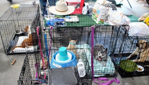 Diane Andrews, a 69-years-old woman from Baton Rouge, also saved her five dogs from drowning and is now staying in a shelter with her five pups. Photo Credit: David Lohr via The Huffington Post