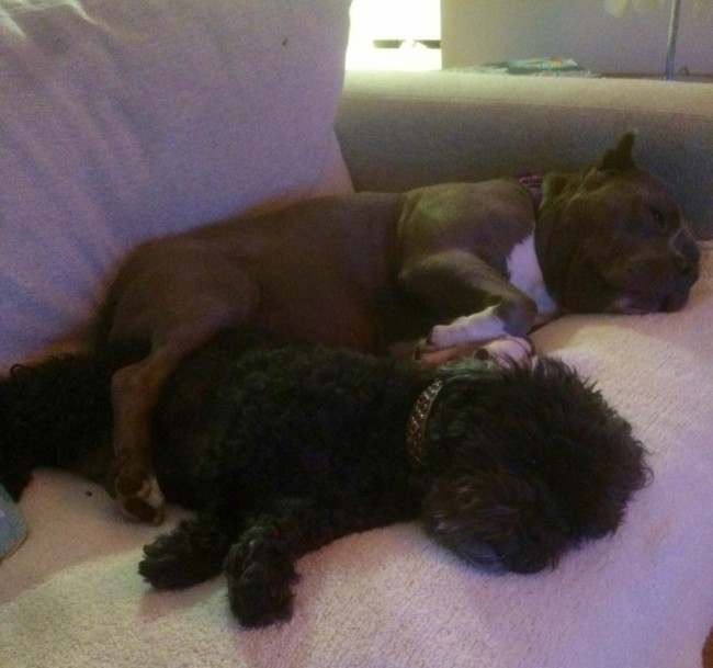 Lulu lends a comforting leg to her aging buddy Stanley, who is actually the irascible one in the family.