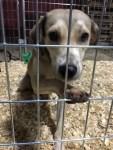 Humane Society of Louisiana dog rescued from flooding