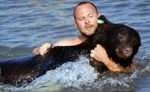 man-saves-black-bear-drowing-in-gulf-after-being-tranquilized
