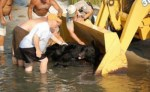 men-and-tractor-help-black-bear-out-of-water