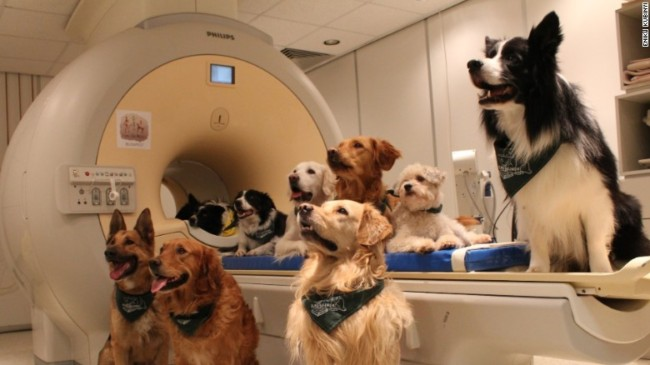 The trained dogs sit around the MRI scanner as they listen to their trainer. Photo Credit: CNN