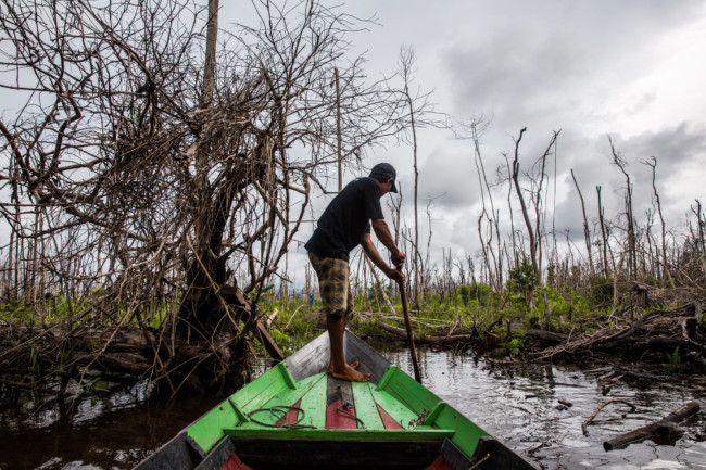 Remnants of burned trees on peatland forest destroyed by fire last year in West Kalimantan province, Indonesia. Photo Credit: Kemal Jufri for The New York Times