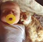 cat caregiver comforts sick baby with fever