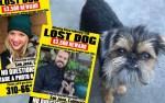 los angeles couple postpones wedding to find their missing dog