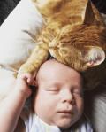 pet cat comforts sick newborn baby