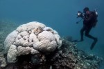 severe bleaching of coral at great barrier reef australia