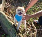 Rescue dog Sammy from Everybody Loves Sammy online community