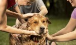 how to de-skunk your dog with bath at-home recipe