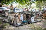 Dogs safe in temporary shelter after being rescued from Hurricane Harvey