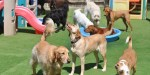 dogs in doggy daycare