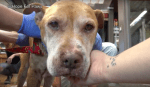 Abandoned Senior Dog Left Behind When His Family Moved