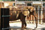 elephant at Riverbanks Zoo and Garden, Columbia, South Carolina