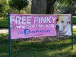sign for grassroots campaign to free Pinky the dog