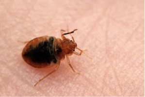improve home health with pestwiki
