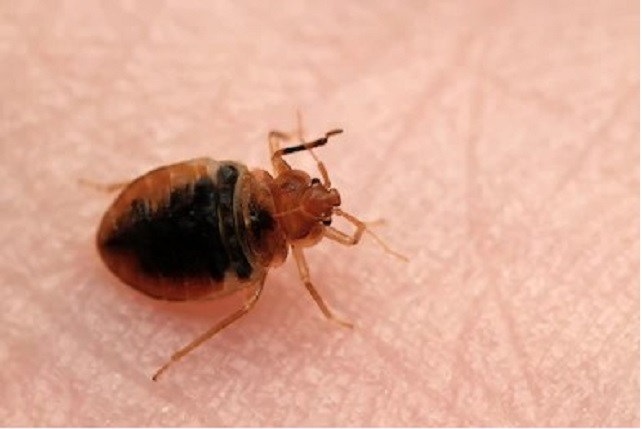 Improve your home health conditions with Pestwiki