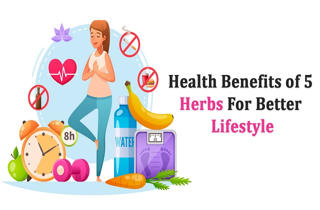 Health Benefits of 5 Herbs for Better Lifestyle