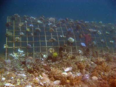 Biorock reef restoration for sustainable ecotourism in ...