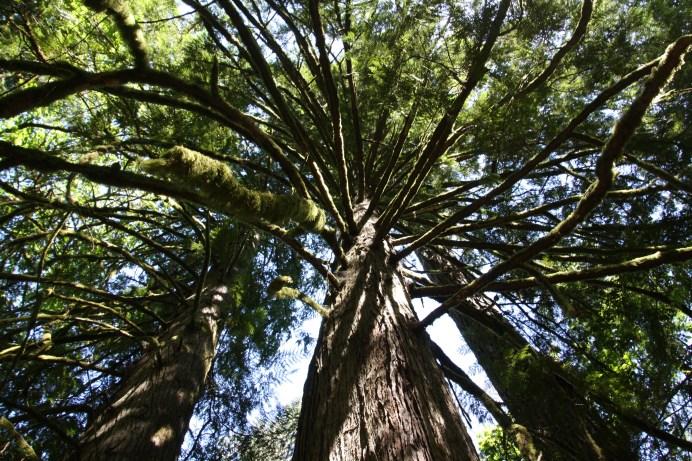 Gorgeous trees...