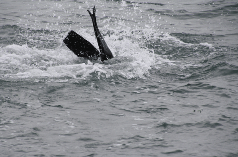 Diving away