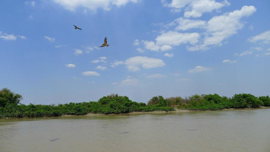 adelaide river kites