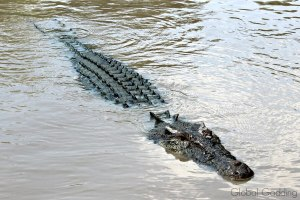 HOW TO VIEW CROCODILES IN THE WILD ON A JUMPING CROCODILE CRUISE