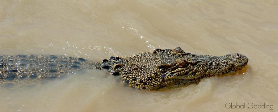 Jumping Crocodile Cruise Adelaide River Australia