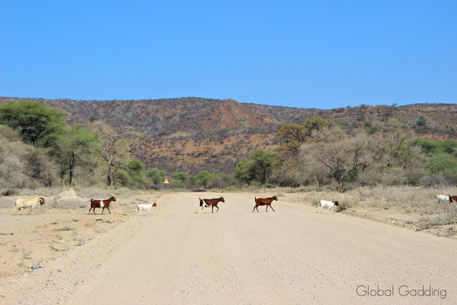 Animals Seen On Namibia Road Trip