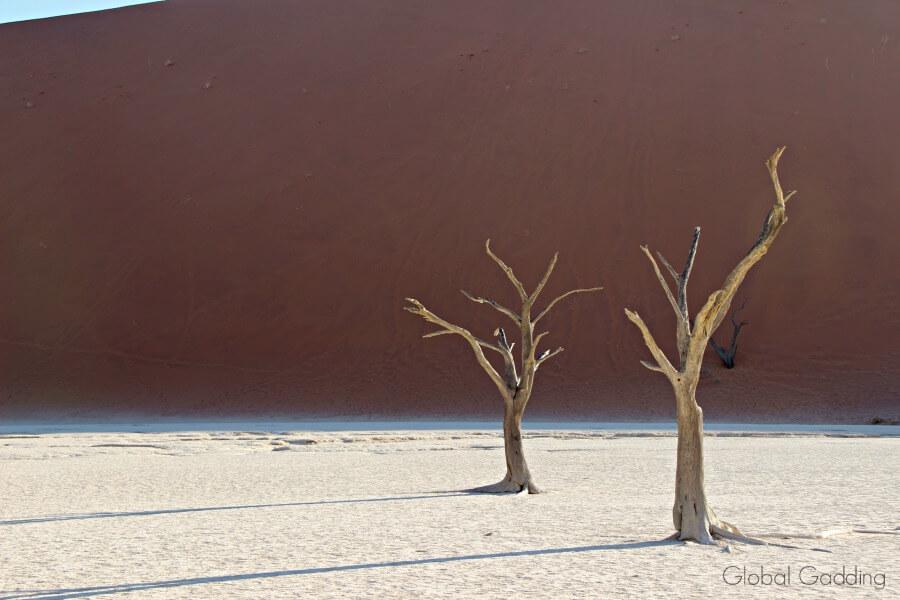 deadvlei tree shadows