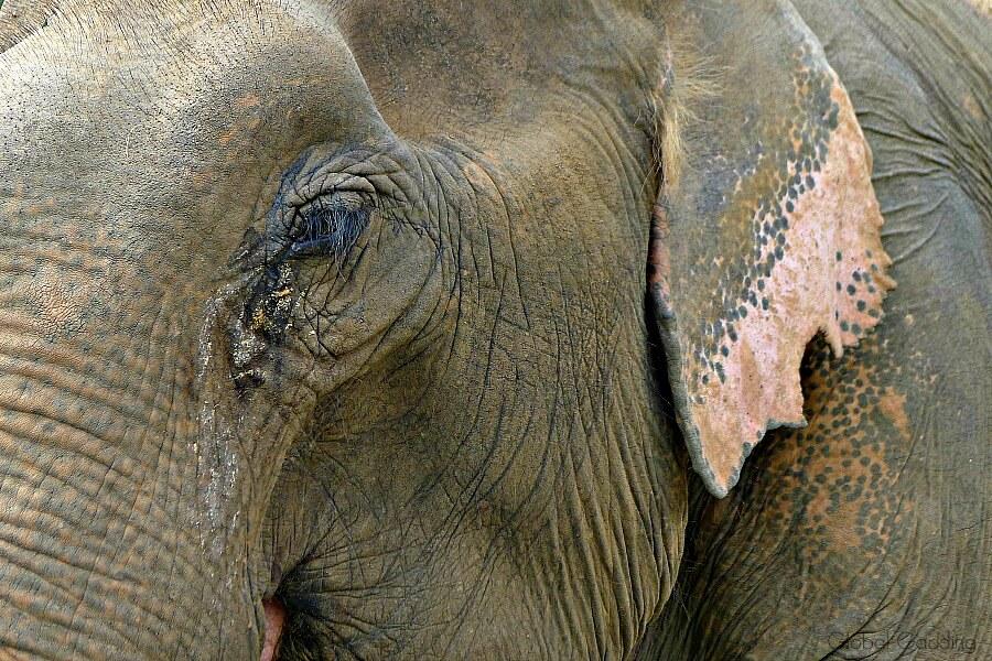 Ethical Elephant Encounters Chiang Mai