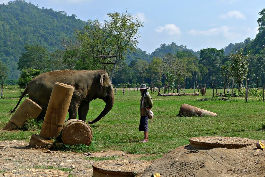 ethical elephant encounter chiang mai thailand