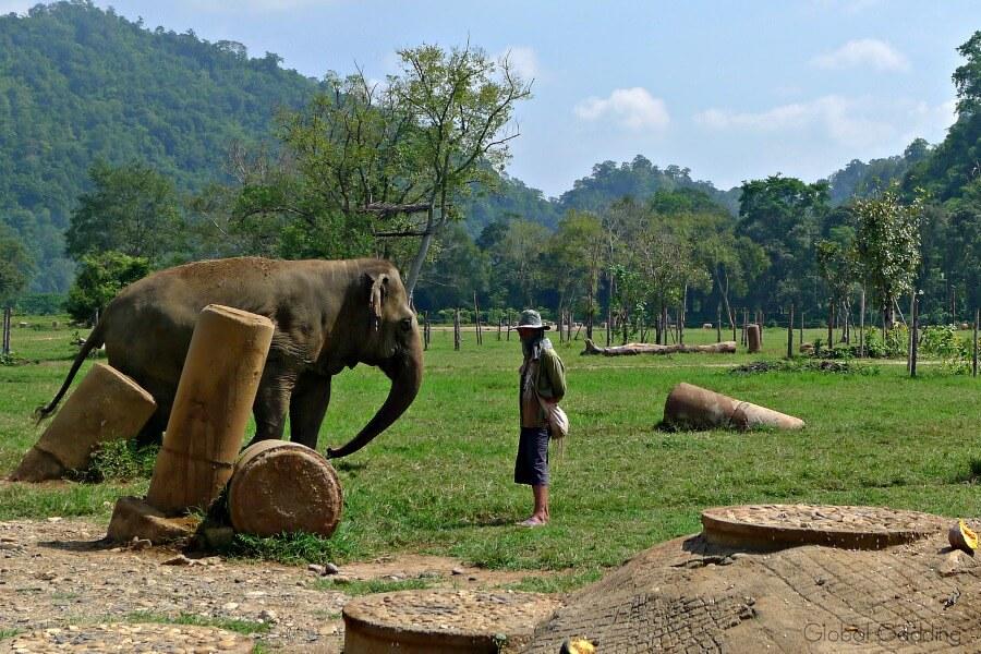 ethical elephant encounter chiang mai thailand