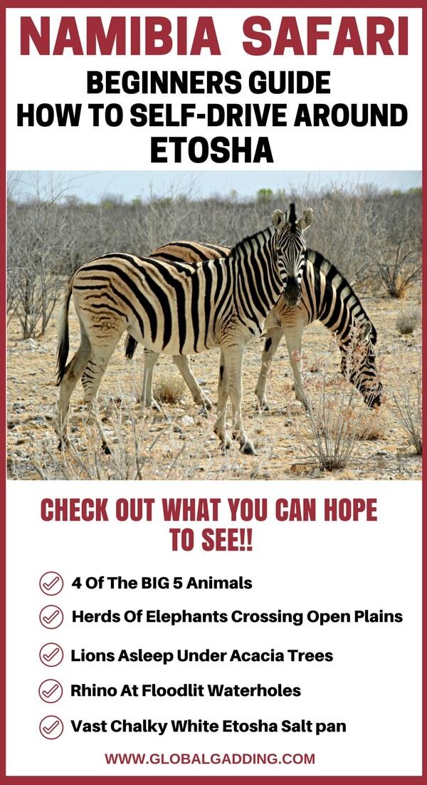 Etosha National Park Self-Drive Safari : Advanced Guide +