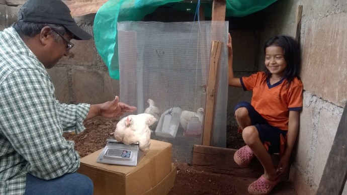 SHI staff member helps a young girl weigh her chicken
