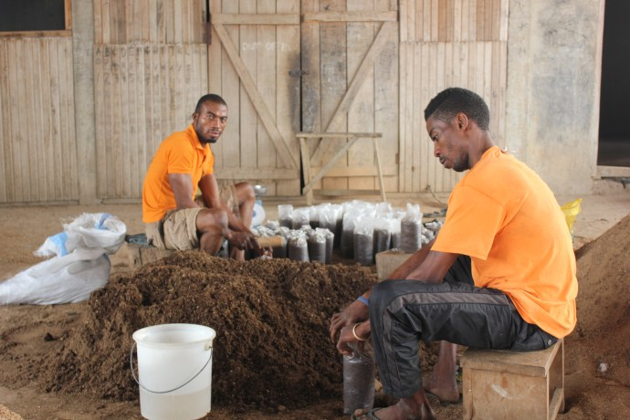 two men sit and gather bags of sawdust to produce mushrooms