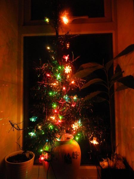 venerable-45-year-old-family-tree.jpg