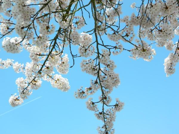 Dreaming Blue Sky, photo by JMorton
